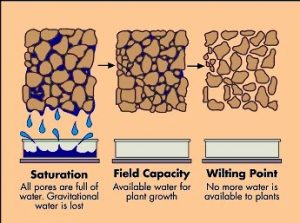 soilsaturation